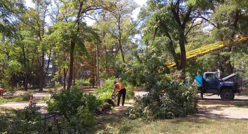 Попытка упорядочить процесс удаления аварийных деревьев