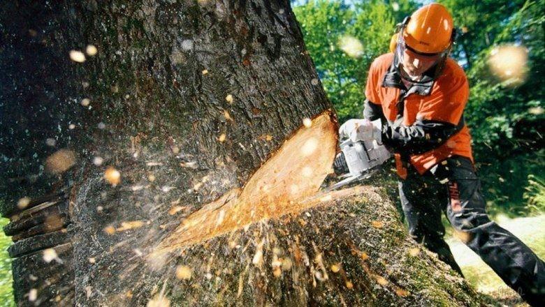 Дерева проти реконструкції?